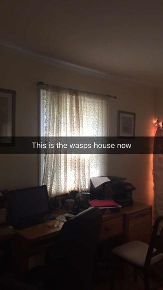 wasp pic 6